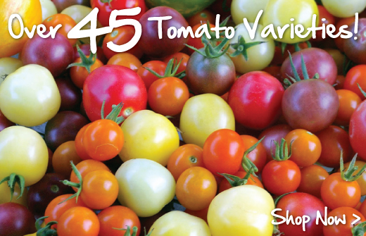 45-Tomato-Varieties urban