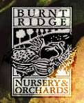 burnt-ridge-seed-catalogs