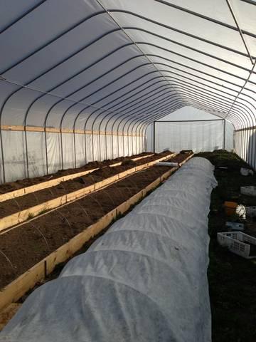 high tunnel Dec 2012