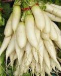 whiteradishes