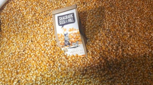shagbark popcorn