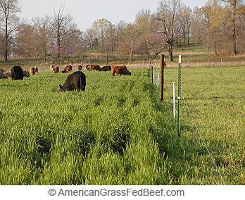 rotational grazing