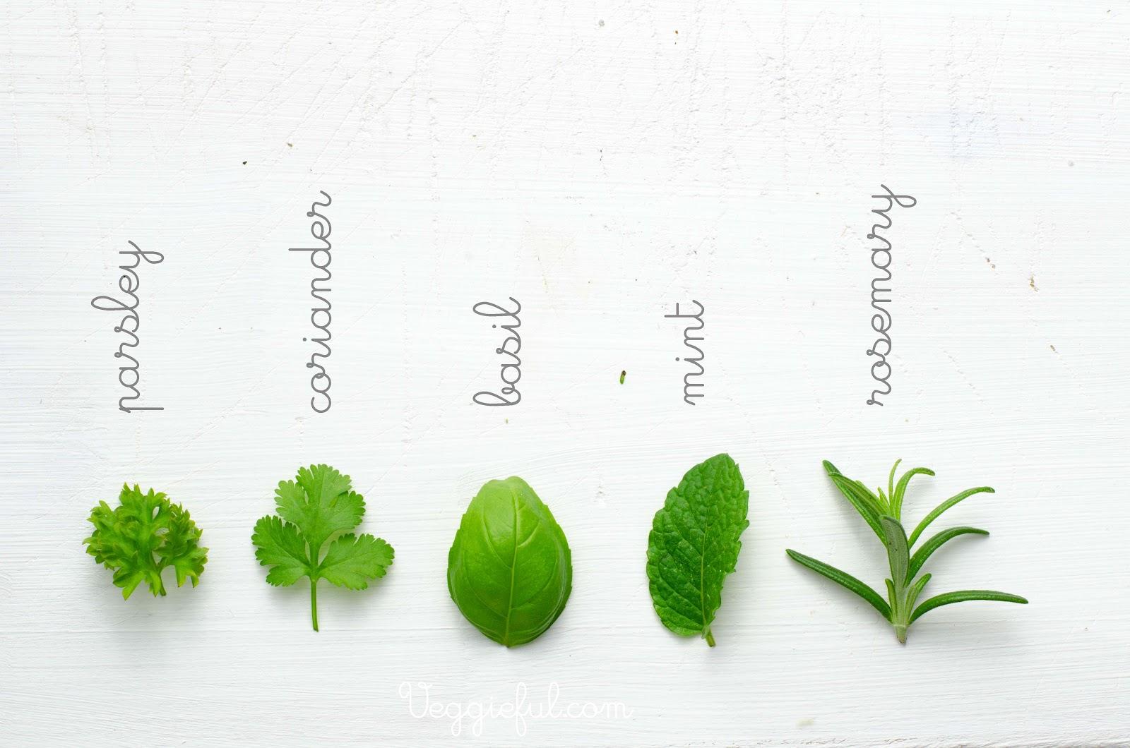 Identification Of Herbs Wildramp